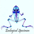 2018_Zoological Specimen_logo