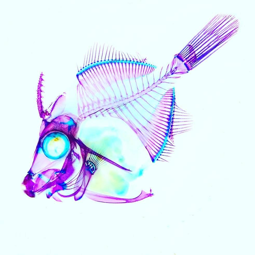 2018_Zoological Specimen_04