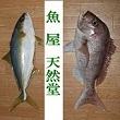 2018_魚屋 天然堂 ~うおや てんねんどう~_logo
