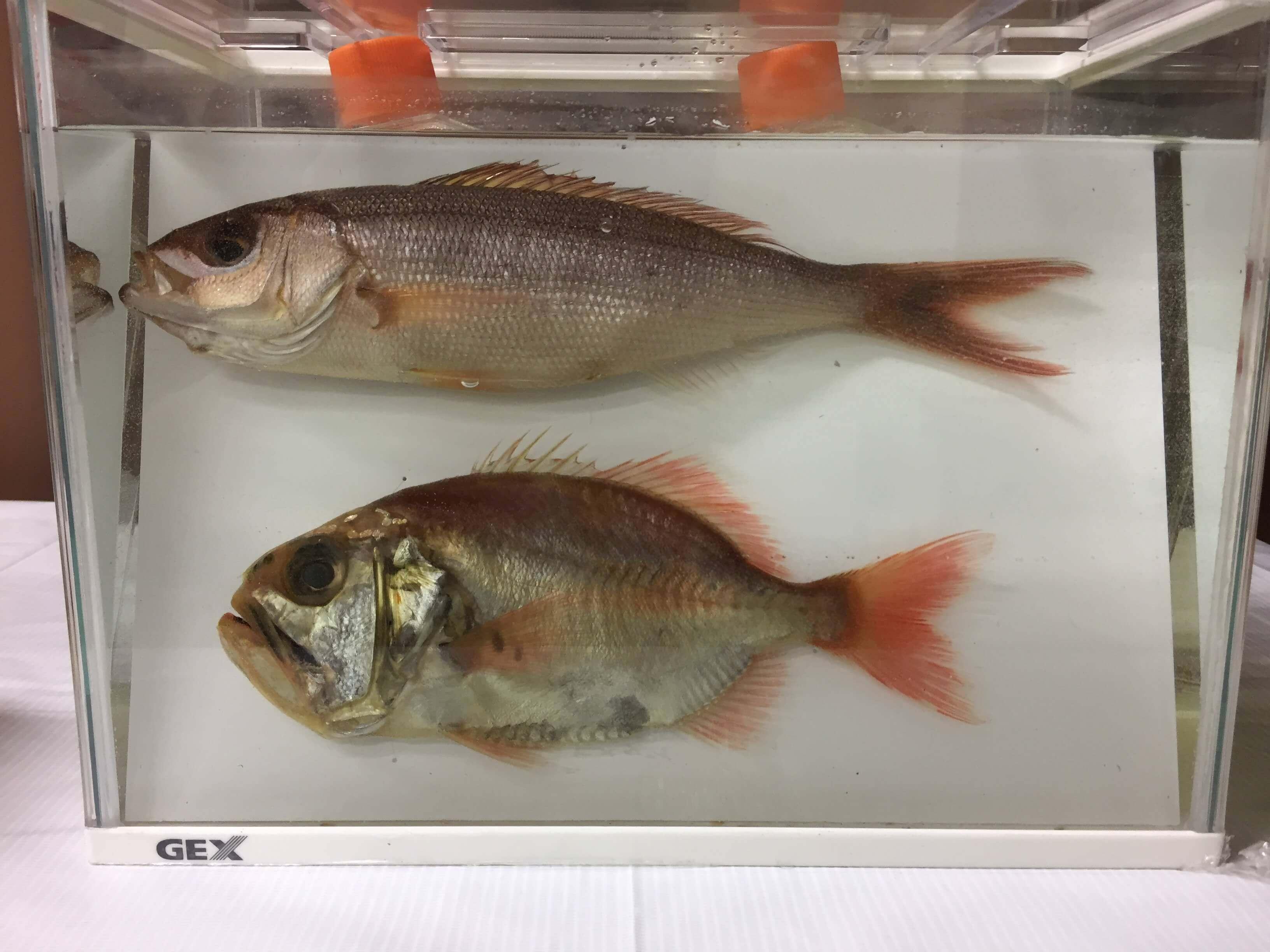 2018 _色彩保存標本展 _06