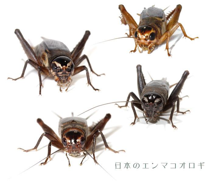 2018_ガクタメ_みのむし商店_01
