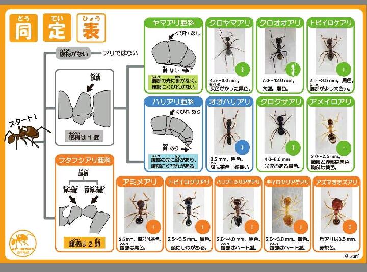 2018_ガクタメ_生物教材ワーク開発部_02