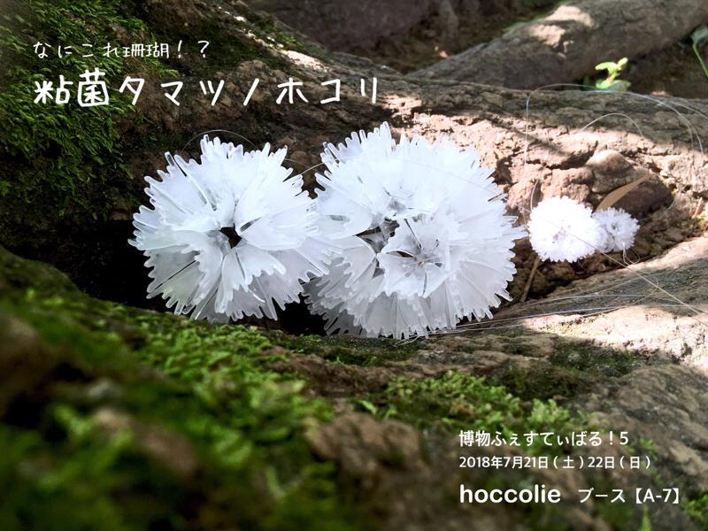 2018_ガクタメ_hoccolie_01
