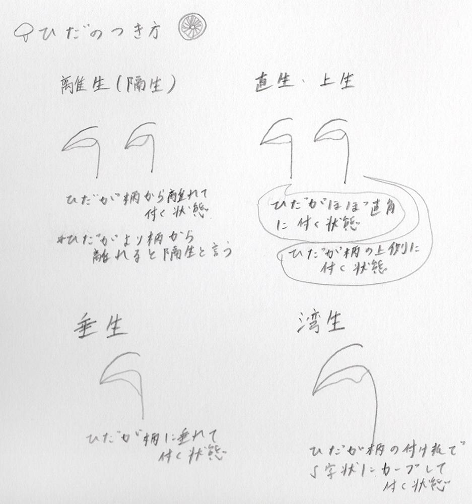 2018_ガクタメ_オガサワラミチ_01