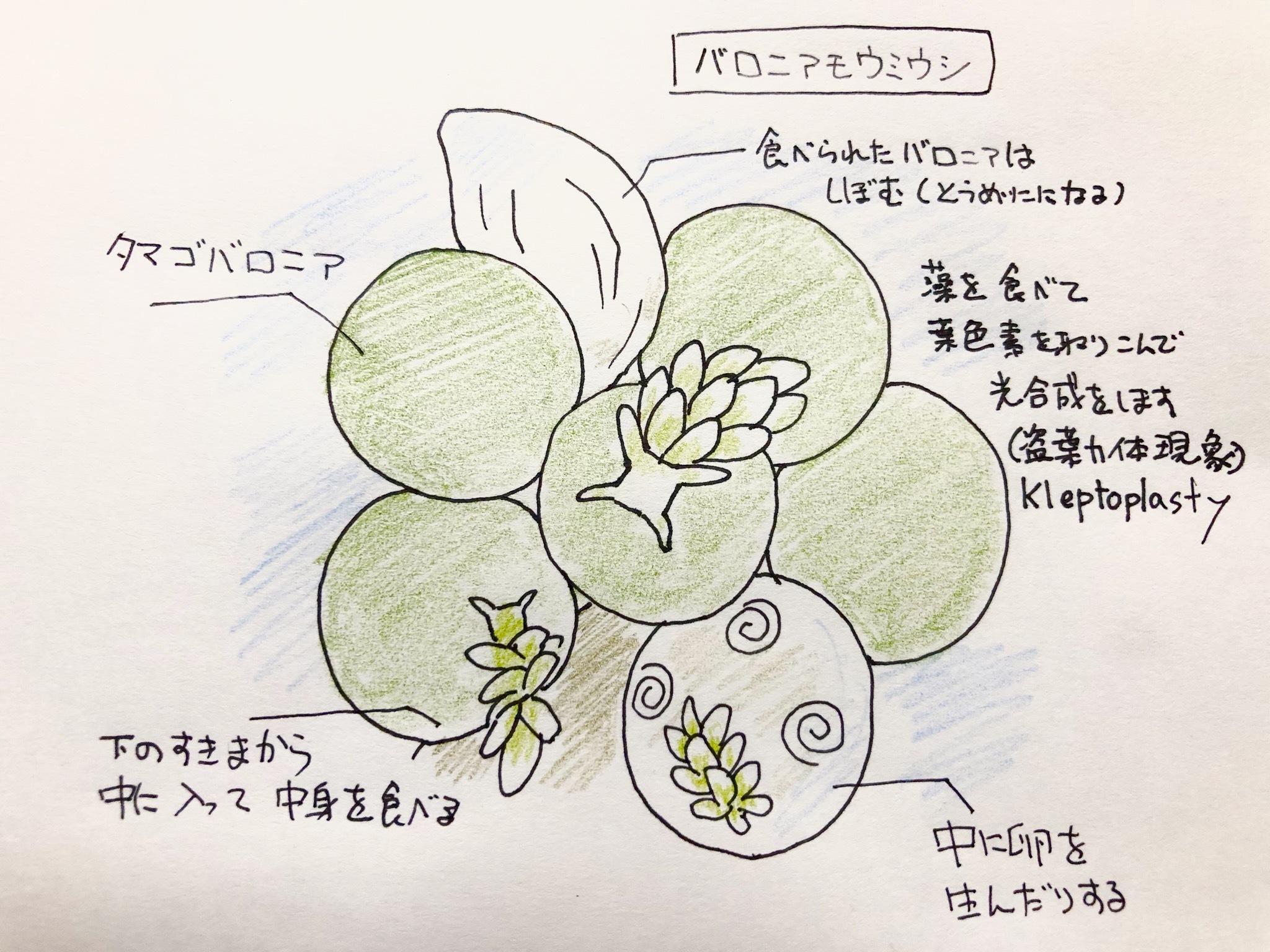 2018_ガクタメ_はる☆どり_01