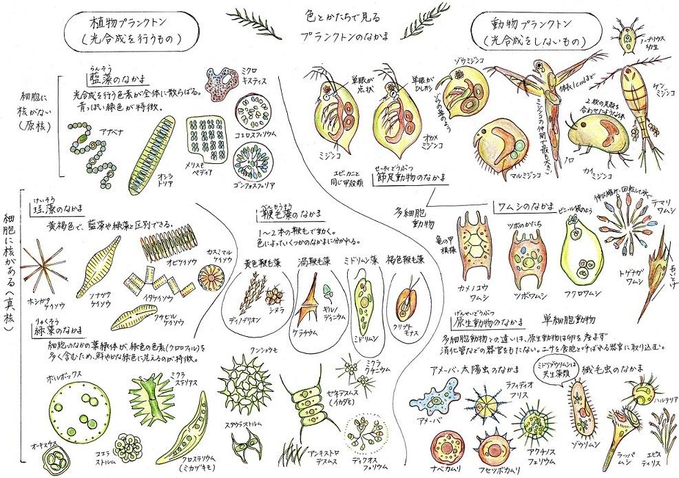 2018_ガクタメ_魅惑の微生物_01