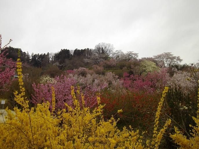 花見山公園②.