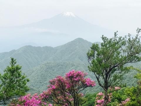 山ツツジと富士山