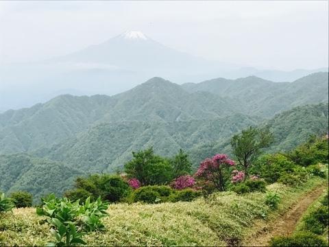 山ツツジと富士山2
