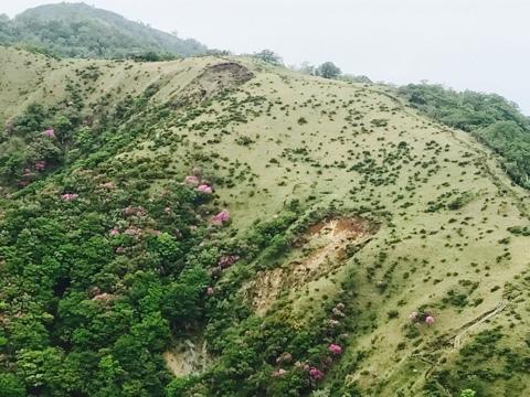 不動ノ峰の山肌に咲く山ツツジ