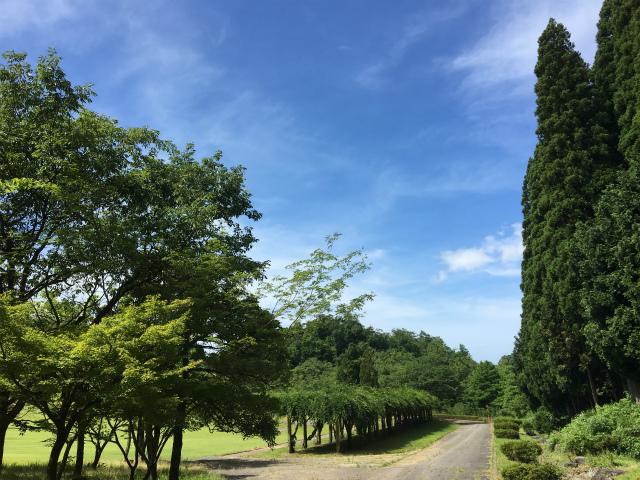 20180701森林公園散歩1