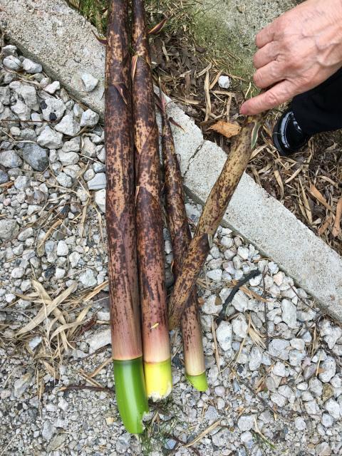 20180623竹採り1