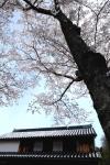 古民家と桜