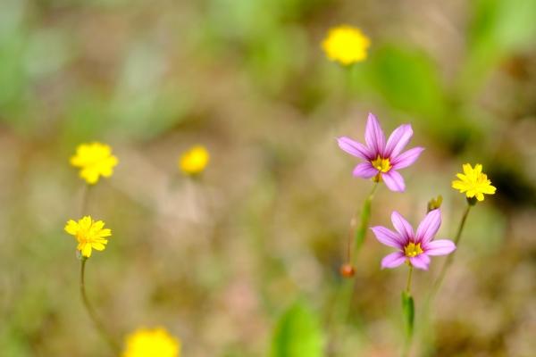 草地を彩る