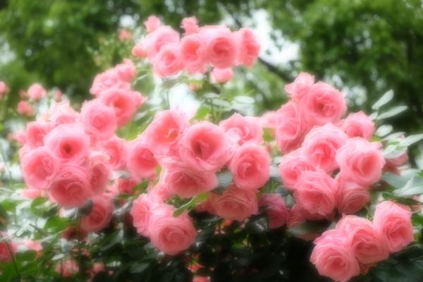 香りの花園