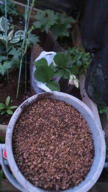まず捨て土と同容量の用土