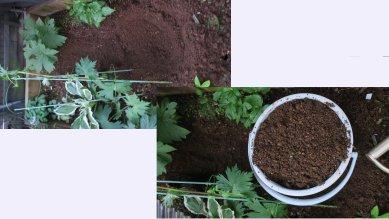 掘り穴と捨て土