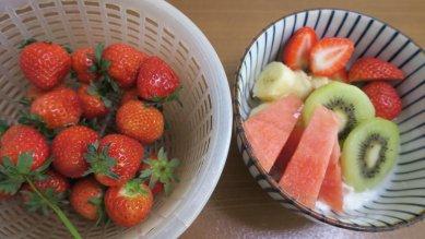 今日の苺収穫とフルーツヨーグルト