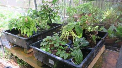 雑木・草物小鉢・乾燥防止対策