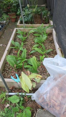 落ち葉の除去と枯葉の整理