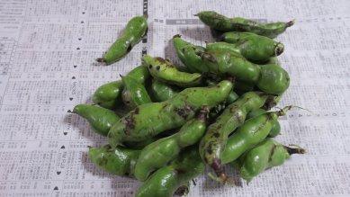 収穫した空豆
