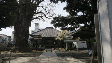 弘福寺・大銀杏