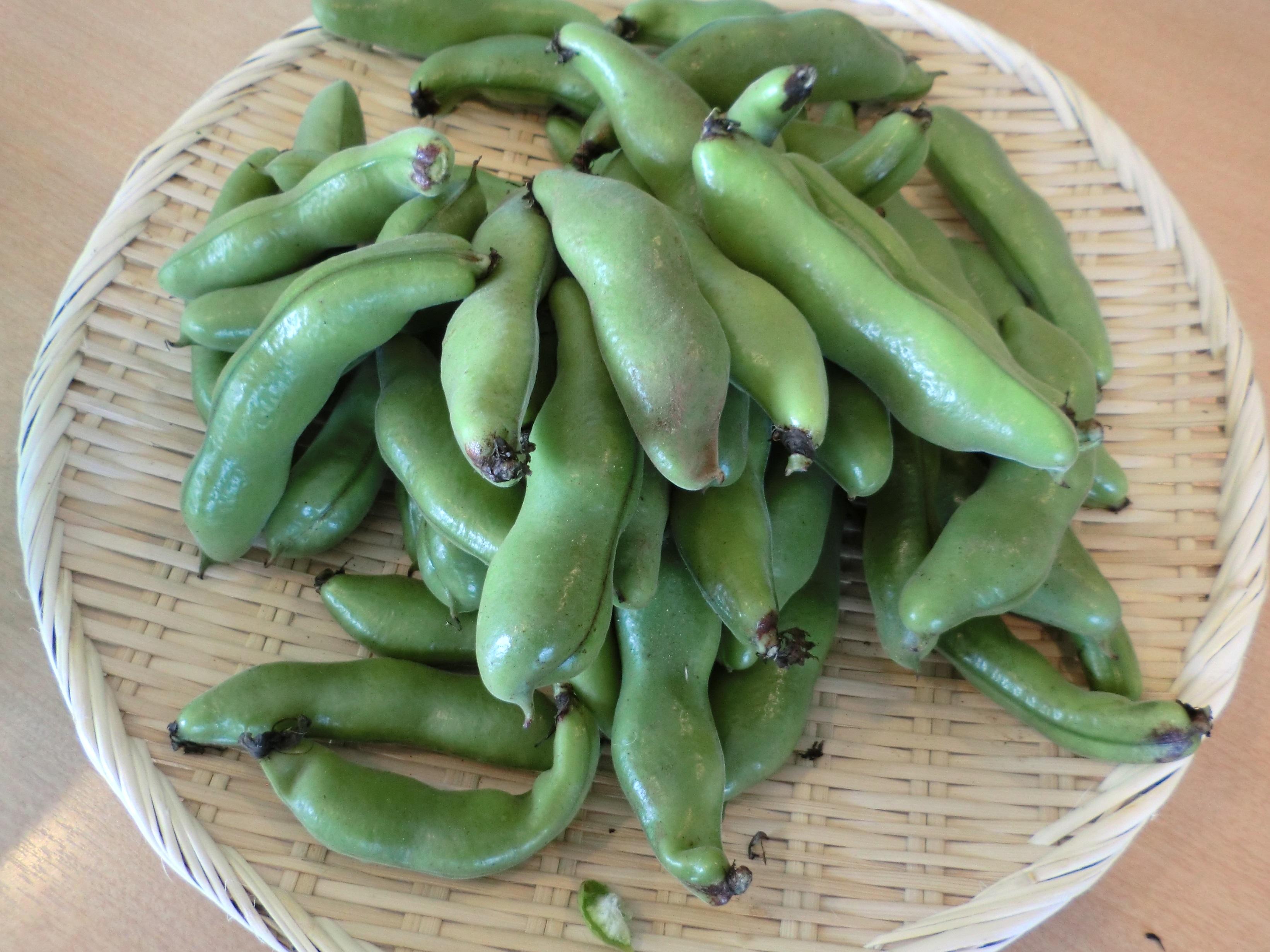 そら豆 収穫