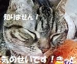 201806161659308a9.jpg
