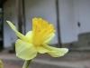 平成30年3月お花