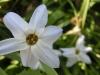 平成30年4月お花