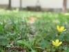 平成30年5月お花