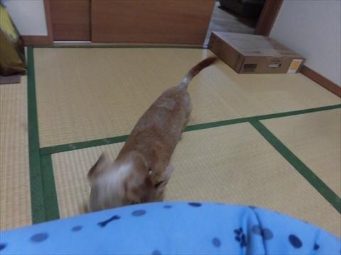 CIMG8380_R.jpg