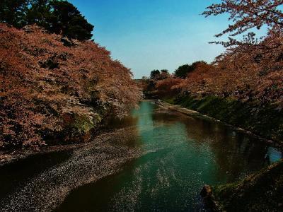 弘前桜まつり