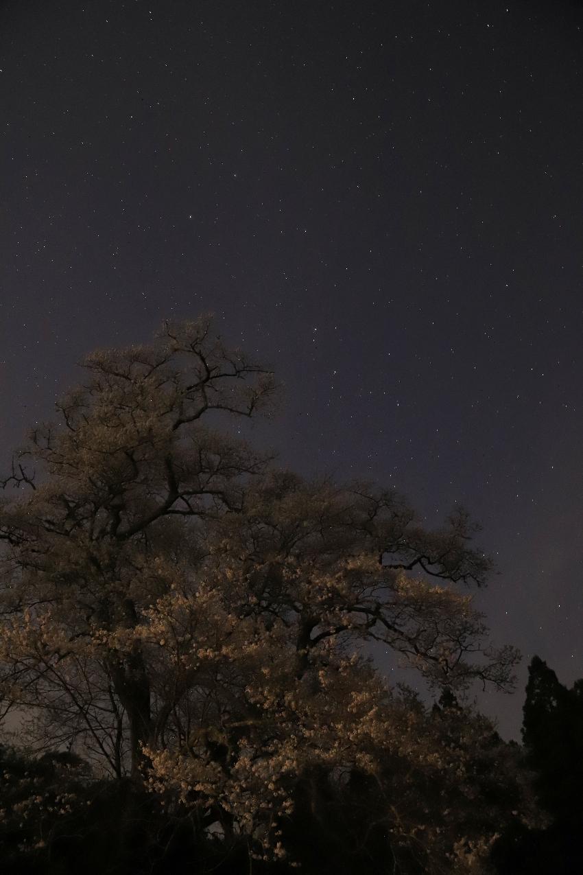 20180420月光下の桜と北斗七星