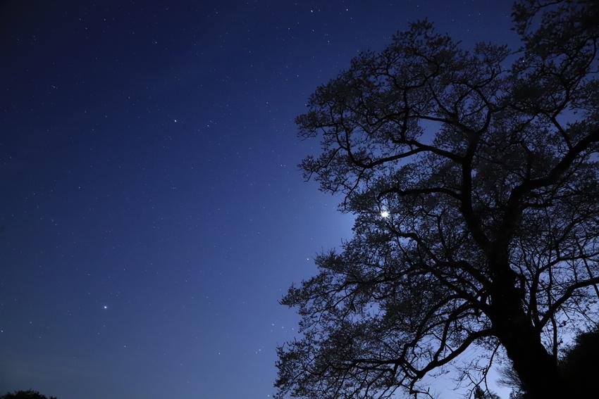 20180420桜と星月夜