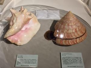 ニッポン貝人列伝-9