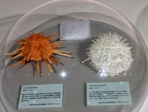 ニッポン貝人列伝-8