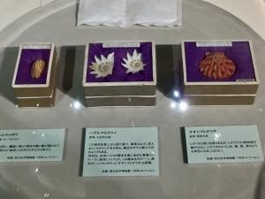 ニッポン貝人列伝-10