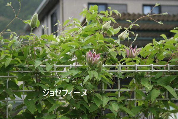 IMG_8277.jpg