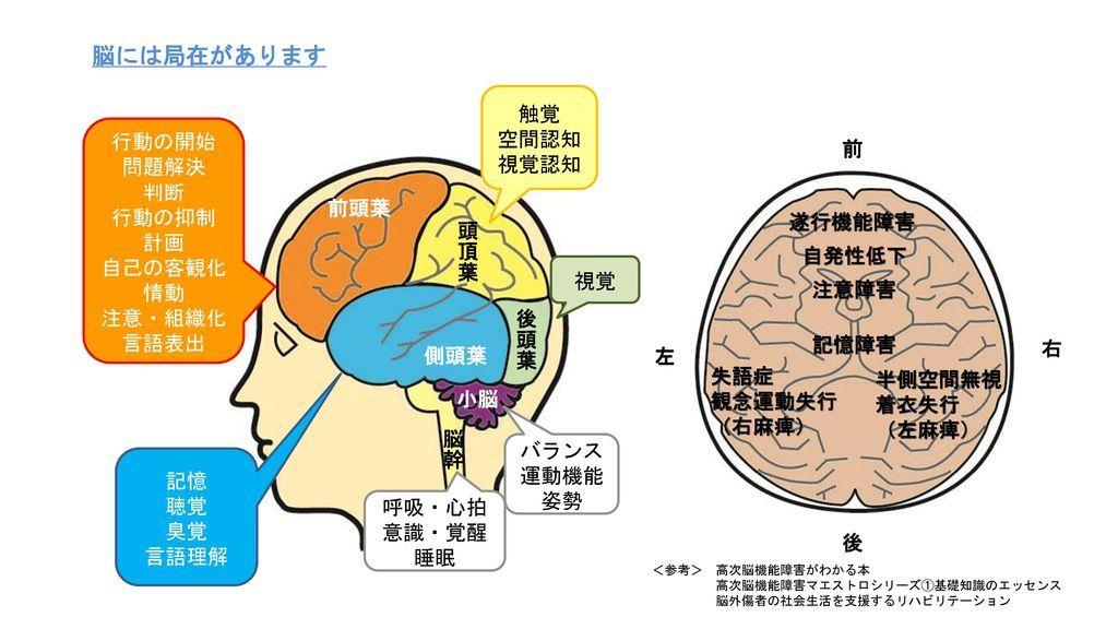 脳には局在があります_触覚_空間認知_視覚認知_行動の開始_前_問題解決_判断_行動の抑制_計画_自己の客観化_前頭葉_情動_遂行機能障害