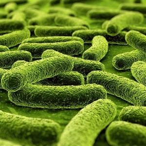 Microbiology_420x420_Multidrug_resistant_Mycobacterium_tuberculosis_15058261_1.jpg