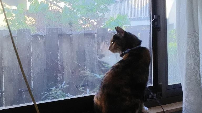 窓から見張りの猫わらわら