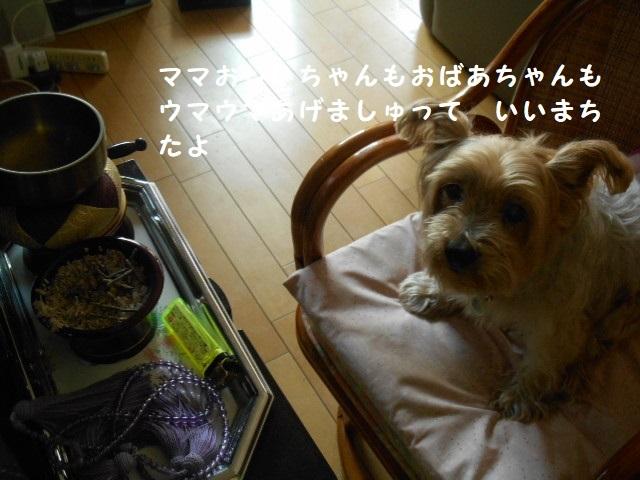 DSCN7109.jpg