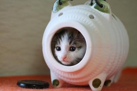 cat子猫ブタ