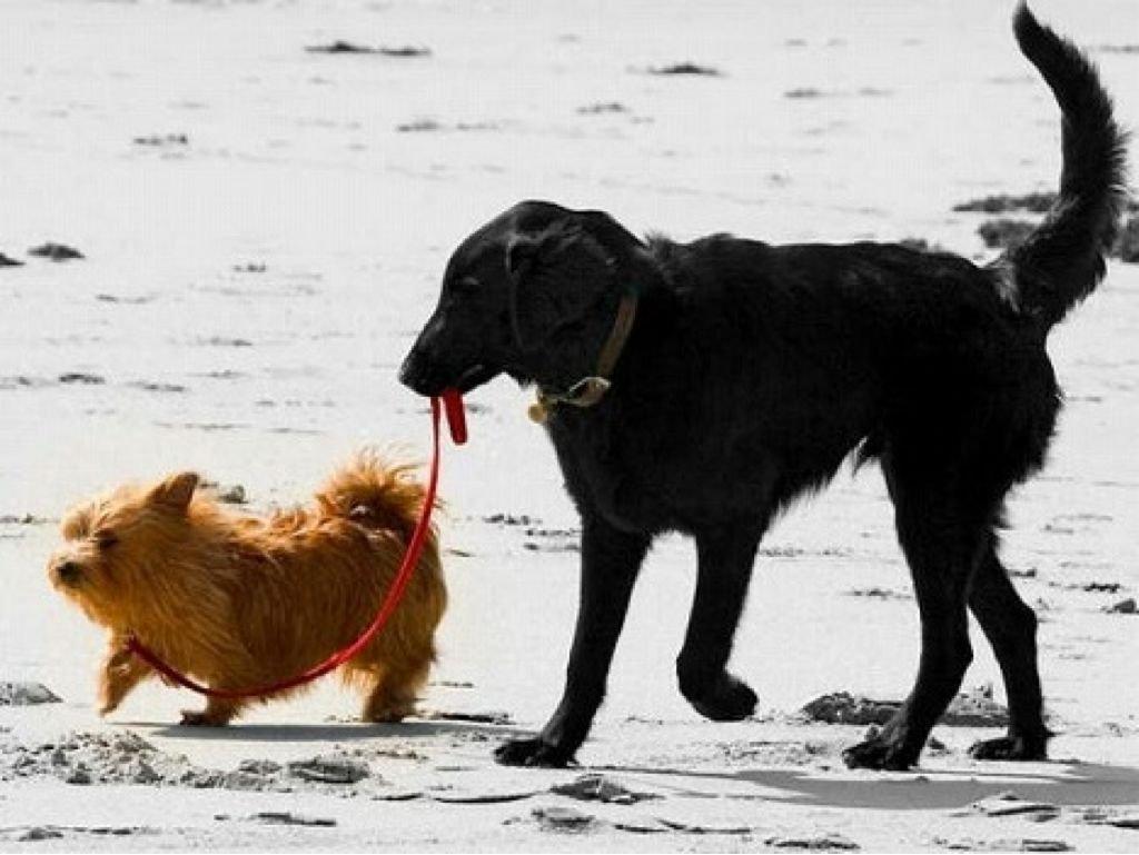 dog散歩