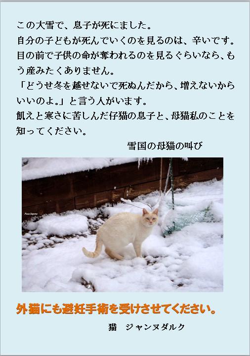 寒さで子供を失った母猫の叫び