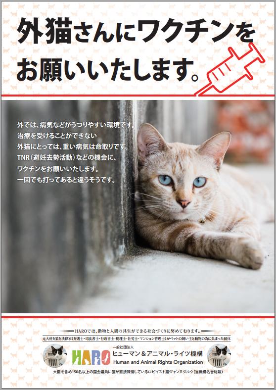 PNG 外猫にワクチンをお願いいたします。 558