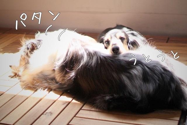 悩める天使な犬