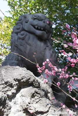 中井御霊神社(新宿区中井)20