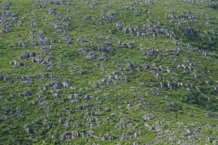 石灰岩の群れ